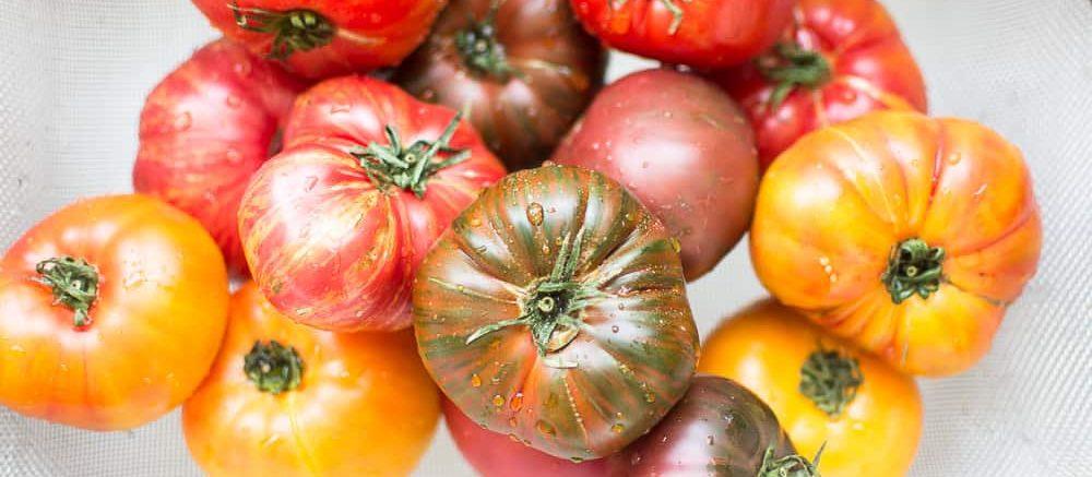 variétés de tomates anciennes-collection de tomates anciennes-sorte-