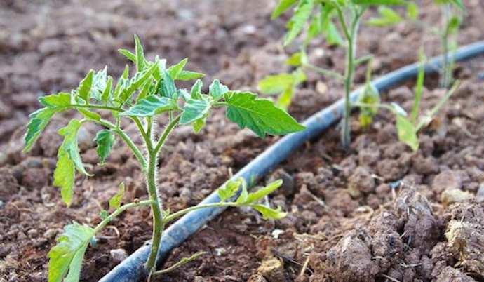 arrosage irrigation en serre