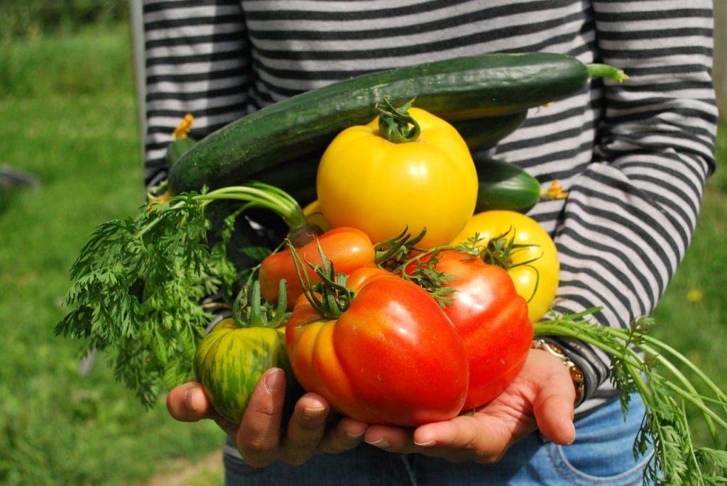engrais potager pour de beaux légumes