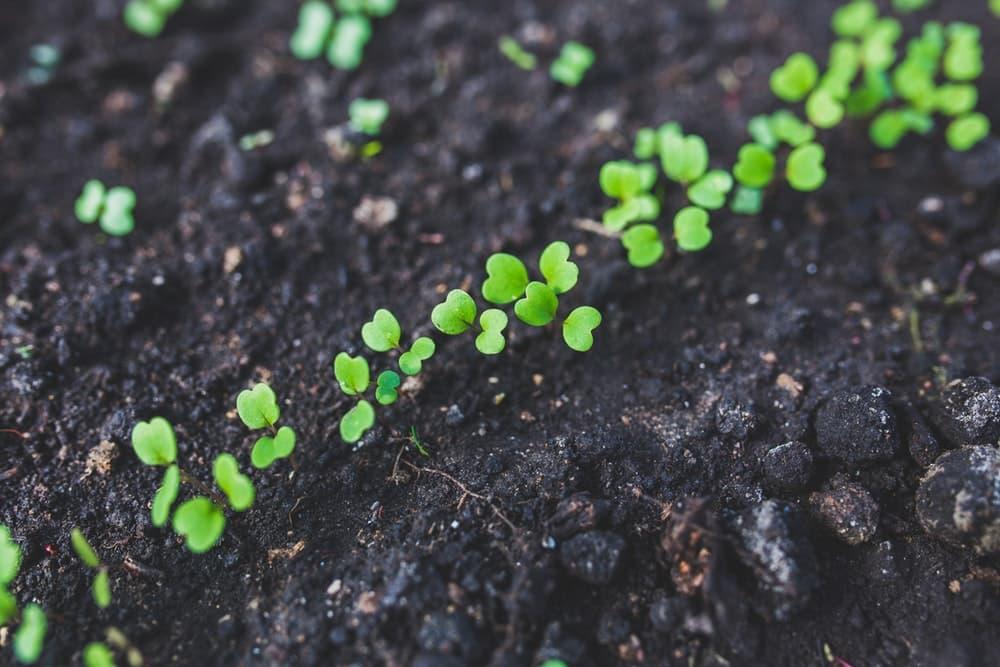 quand jardiner calendrier des travaux au jardin mois par mois 2020