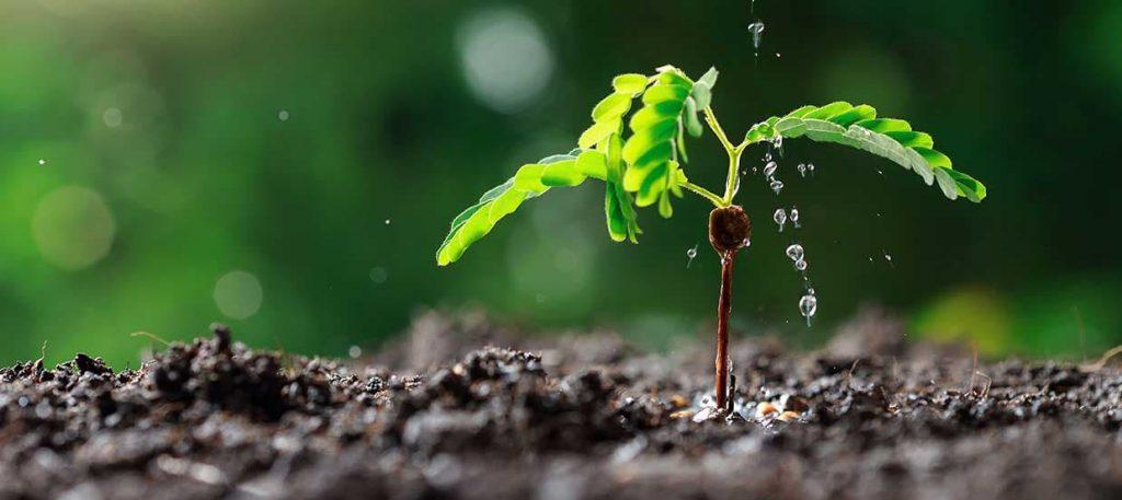 système-d-arrosage-irrigation-serre