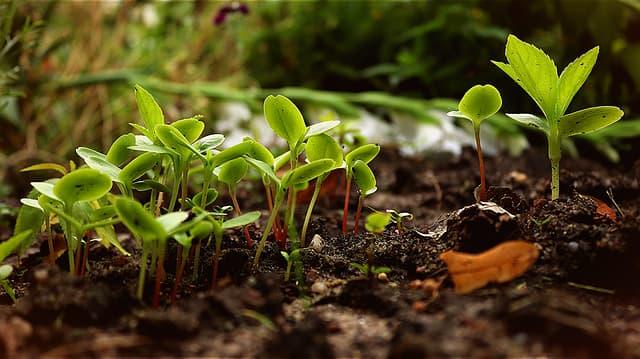 Découvrir la permaculture et ses principes de base